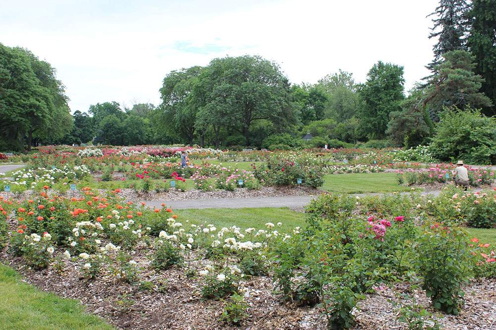 Park-of-Roses-1